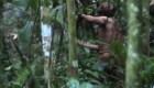 Éste podría ser el único sobreviviente de una tribu aborigen
