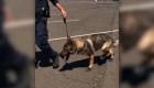 #EstoNoEsNoticia: en Connecticut existe el perro con botas