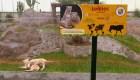 El zoológico de Lima tiene dos nuevos integrantes