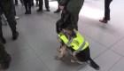 Amenazan de muerte a un perro antinarcóticos en Colombia