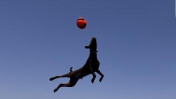 #EstoNoEsNoticia: futbolista de cuatro patas