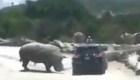 Rinoceronte ataca a una camioneta en zoológico de Puebla