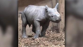 #EstoNoEsNoticia: un curioso nacimiento en el zoológico de Chester