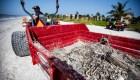 Algas tóxicas están matando la vida marina de la Florida