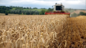 ¿Puede México dejar de importar granos de Estados Unidos?