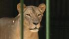 Violencia en Nicaragua lleva a este zoológico a la quiebra