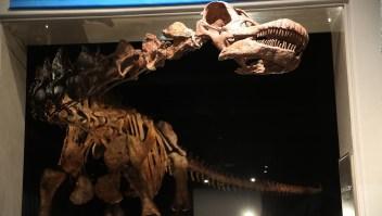 Puedes admirar el dinosaurio más grande del mundo en Nueva York