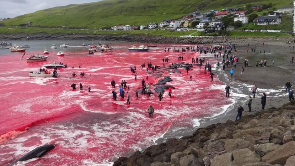 Una caza de ballenas en las Islas Feroe el 30 de julio ha atraído la atención mundial.