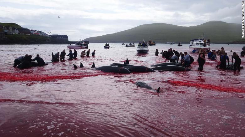 Personas participando en la caza de ballenas el 30 de julio.