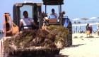 El sargazo en Cancún amenaza al turismo en México
