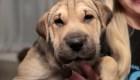 Empresa ofrece permiso de paternidad para cuidar mascotas