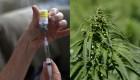 Marihuana medicinal y muerte digna serán legales en Ciudad de México
