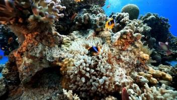 ¿Por qué este arrecife puede sobrevivir en Israel?