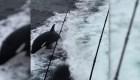 #LaImagenDelDía: Grupo de orcas sorprende a turistas