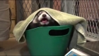 #EstoNoEsNoticia: La osa panda rojo que nació en Milwaukee