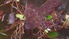 Islas de hormigas sorprenden a los internautas