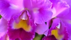 Miles de orquídeas 'florecen' en Bogotá