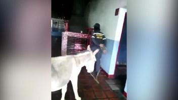Hasta 20 años de cárcel por ridiculizar a Maduro con un burro
