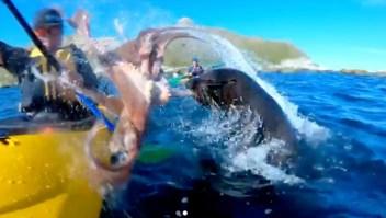 Foca abofetea a kayakista con un pulpo