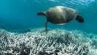 La Gran Barrera de Coral impactada por contaminantes de un crucero de Carnival