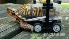 """Una tortuga camina gracias a una """"silla de ruedas"""" con piezas Lego"""