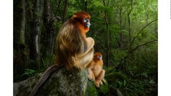 Estos son los ganadores del concurso Wildlife Photographer of the Year 2018