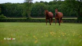 Establos Godolphin, la vida de un caballo después del galope