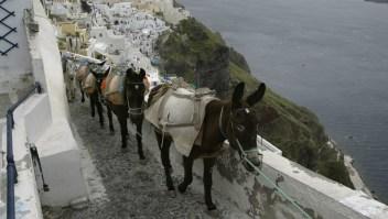 Burros en Grecia