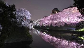 Parque Ueno, Tokio: uno de los lugares más famosos de hanami en Tokio, el Parque Ueno está lleno de miles de cerezos. Como resultado, recibe una gran cantidad de visitantes, por lo que el espacio debajo de los cerezos rosa pálidos de Yoshino puede ser difícil de conseguir si no llega lo suficientemente temprano.