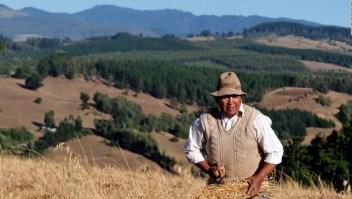 """Fernando del Rincón: """"¿Qué ha fallado con la situación que vive el pueblo mapuche?"""""""