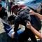 Nicaragua: Otro líder campesino arrestado