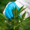 Cannabis ya puede recetarse en el Reino Unido