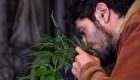 Poderes en México dialogan sobre el uso lúdico del cannabis