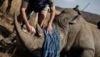 China da marcha atrás y protege a tigres y rinocerontes