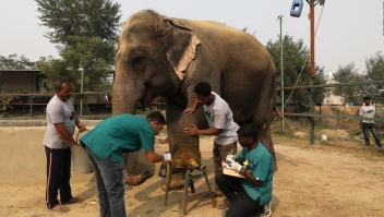 India inaugura primer hospital para elefantes