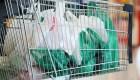 Corea del Sur prohibe las bolsas plásticas