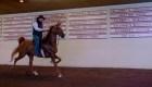 """Una de las razas de caballos más llamativas del mundo está """"hecha en EE.UU."""""""