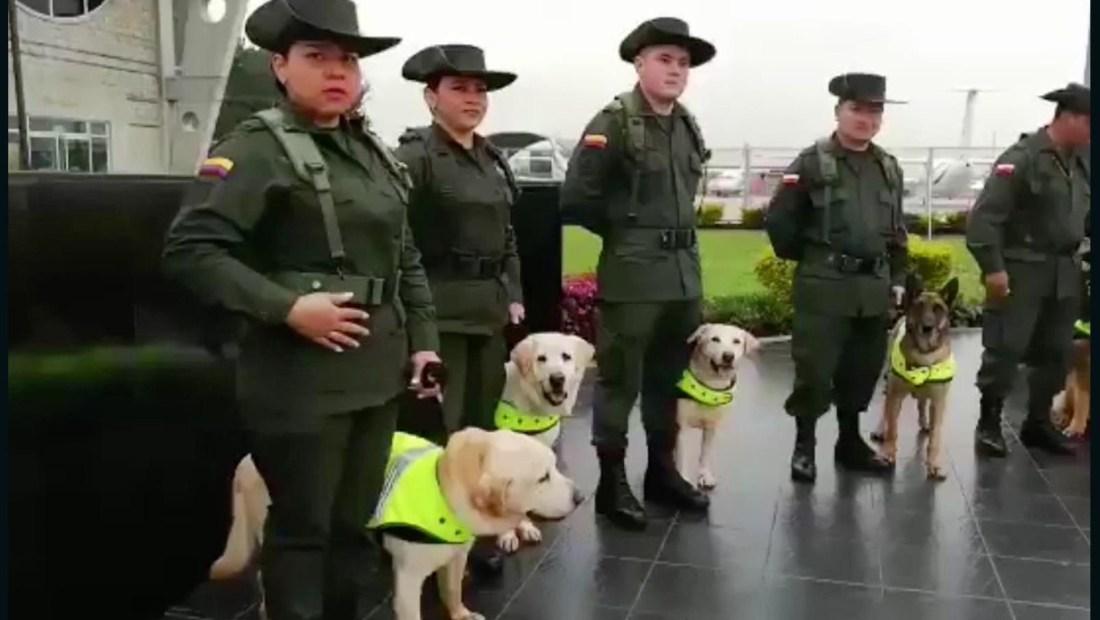 Perros antinarcóticos son jubilados y entregados a adopción