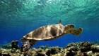 100 tortugas muertas tenían plástico en sus intestinos