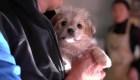 Clonación de mascotas; un curioso servicio en China