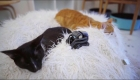 Mira a estos tiernos gatitos jugar con pequeños robots