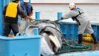 Japón volverá a la caza comercial de ballenas