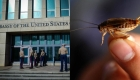 Científicos concluyen que supuesto ataque sónico de Cuba a EE.UU. eran zumbidos de grillos