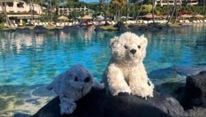 Estos peluches tuvieron unas vacaciones de lujo en Hawai
