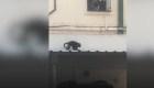 Mono suelto en la ciudad de Buenos Aires