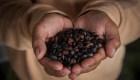 Especies de café en vías de extinción