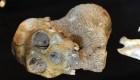 Hallan fósiles claves para el origen de la humanidad