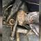 Pareja encontró en la Florida una granada de la Segunda Guerra Mundial