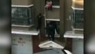Lechero rescata a bebé en China