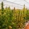 Argentina: habilitan el primer centro de cannabis medicinal del país